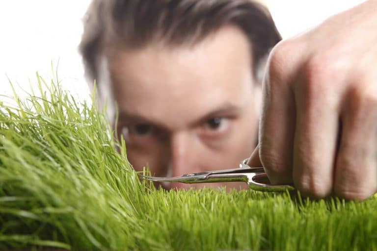 Precise lawn cutting services in edmonton and area