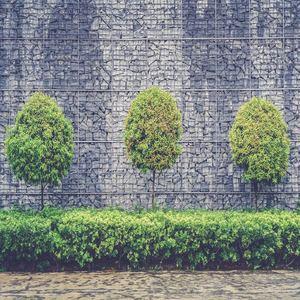 Shrub and tree maintenance service fertilize shape and prune