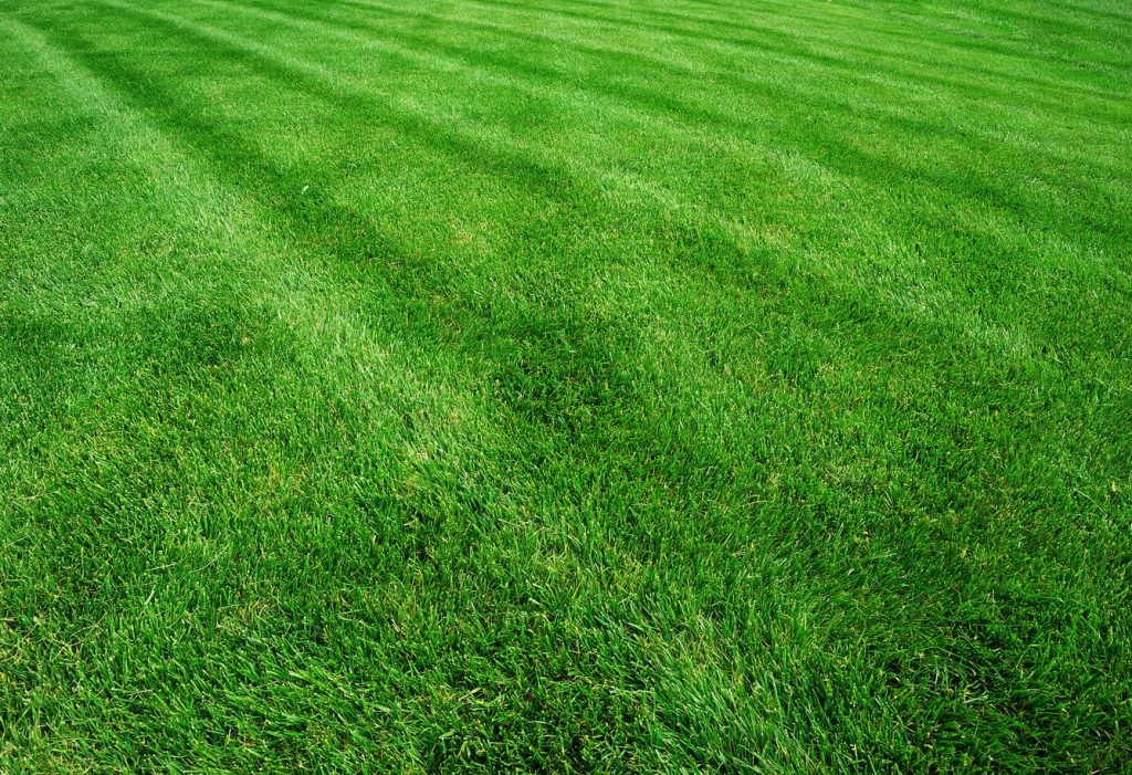 Lush green professional lawn maintenance. Unicutters lawn care we offer weekly and biweekly lawn cutting mowing services with high nitrogen iron lawn fertilizer packages, overseeding with premium grass seed mix and spring and fall cleanup services with deep core aeration, power raking